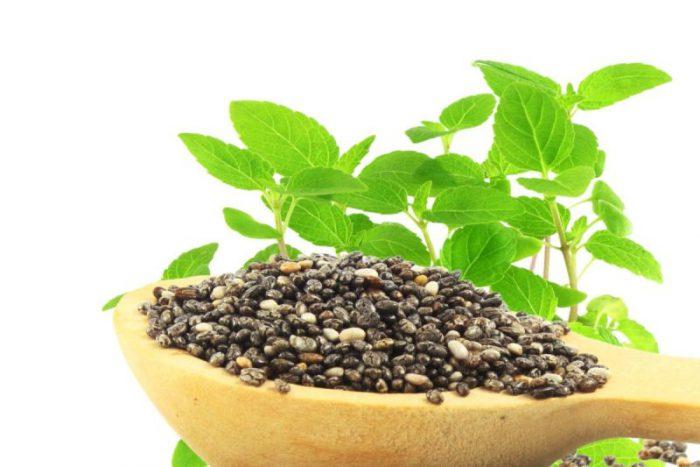 olej z nasion Chia